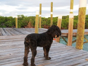 Take your pet to the Bahamas