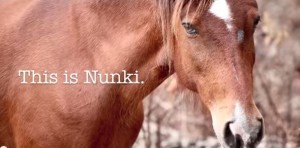 Nunki the Last Wild Horse of Abaco