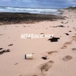El Faro Debris washing up on Abaco Bahamas Beaches